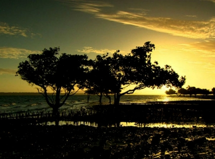 Madagascar's bid to save its majestic baobab trees