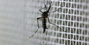 US fights Zika mosquitoes with limited arsenal